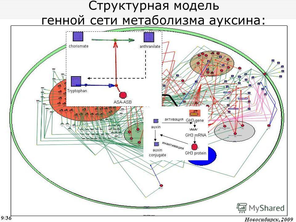 Auxin metabolism gene network UCI,2007 активация инактивация Структурная модель генной сети метаболизма ауксина: Новосибирск, 2009 9/36