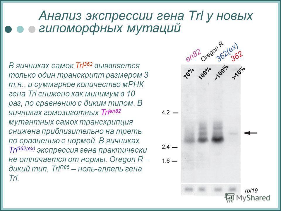 Анализ экспрессии гена Trl у новых гипоморфных мутаций В яичниках самок Trl 362 выявляется только один транскрипт размером 3 т.н., и суммарное количество мРНК гена Trl снижено как минимум в 10 раз, по сравнению с диким типом. В яичниках гомозиготных