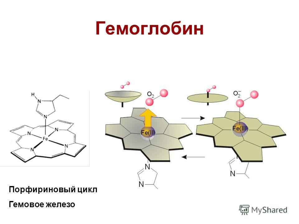Гемоглобин Порфириновый цикл Гемовое железо
