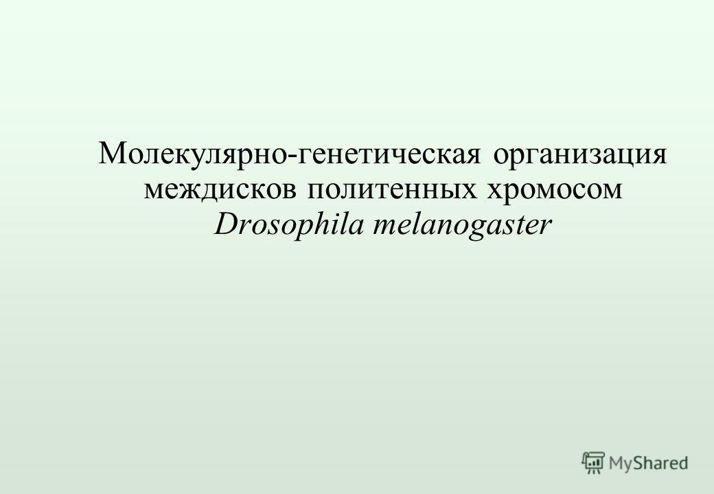 Молекулярно-генетическая организация междисков политенных хромосом Drosophila melanogaster