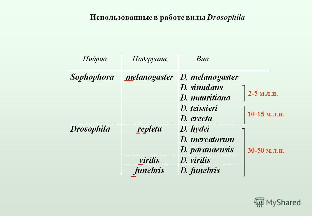 Использованные в работе виды Drosophila 2-5 м.л.н. 10-15 м.л.н. 30-50 м.л.н.