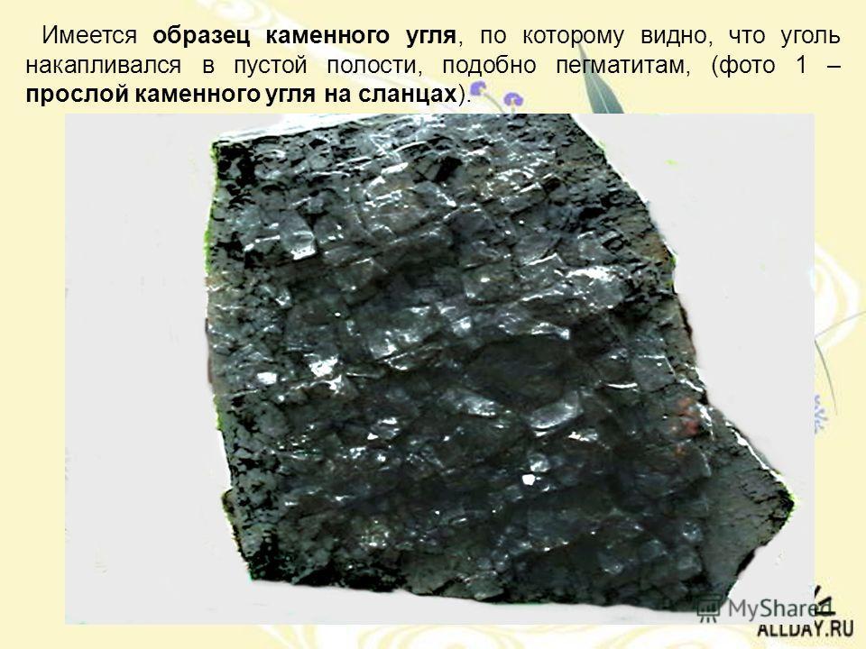 Имеется образец каменного угля, по которому видно, что уголь накапливался в пустой полости, подобно пегматитам, (фото 1 – прослой каменного угля на сланцах).