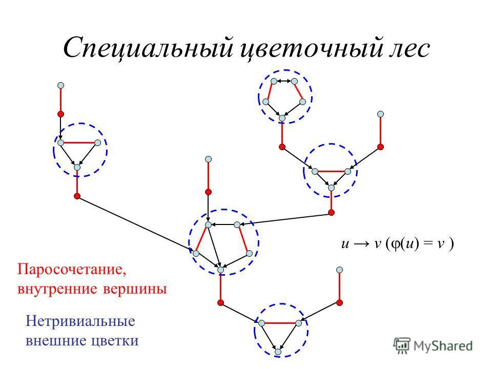 Специальный цветочный лес Паросочетание, внутренние вершины Нетривиальные внешние цветки u v ( (u) = v )