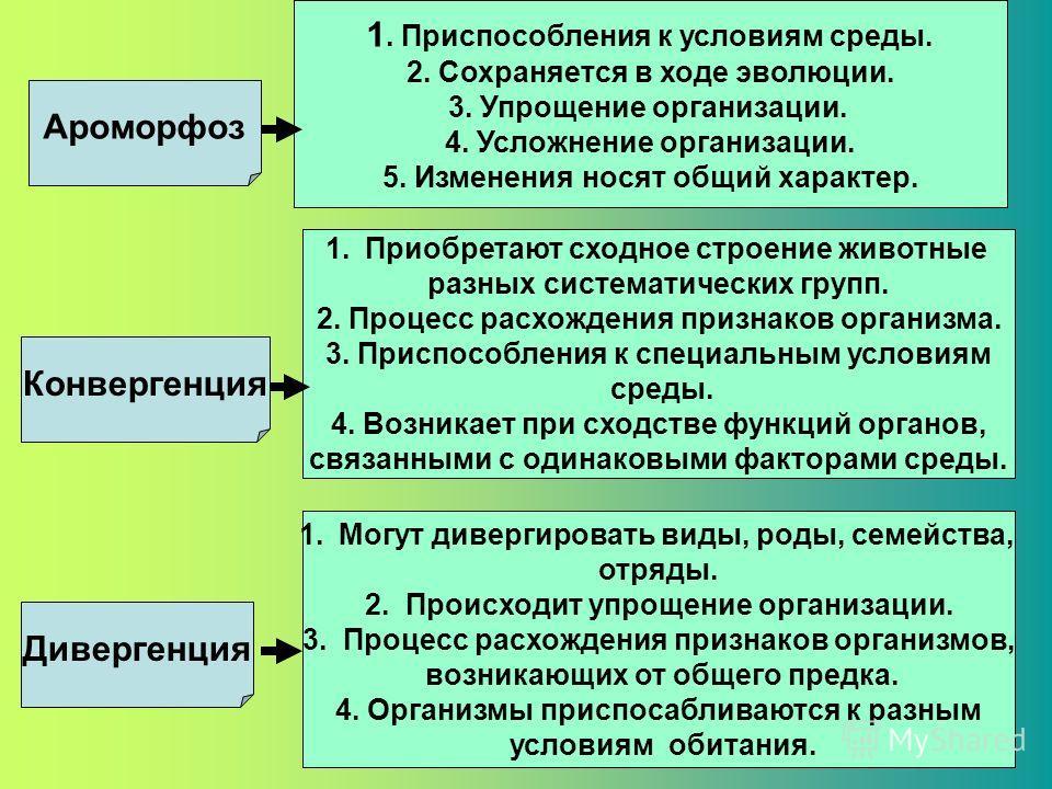 Ароморфоз Дивергенция Конвергенция 1. Приобретают сходное строение животные разных систематических групп. 2. Процесс расхождения признаков организма. 3. Приспособления к специальным условиям среды. 4. Возникает при сходстве функций органов, связанным