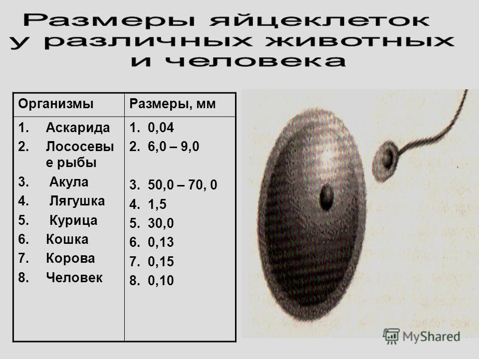 ОрганизмыРазмеры, мм 1.Аскарида 2.Лососевы е рыбы 3. Акула 4. Лягушка 5. Курица 6.Кошка 7.Корова 8.Человек 1. 0,04 2. 6,0 – 9,0 3. 50,0 – 70, 0 4. 1,5 5. 30,0 6. 0,13 7. 0,15 8. 0,10