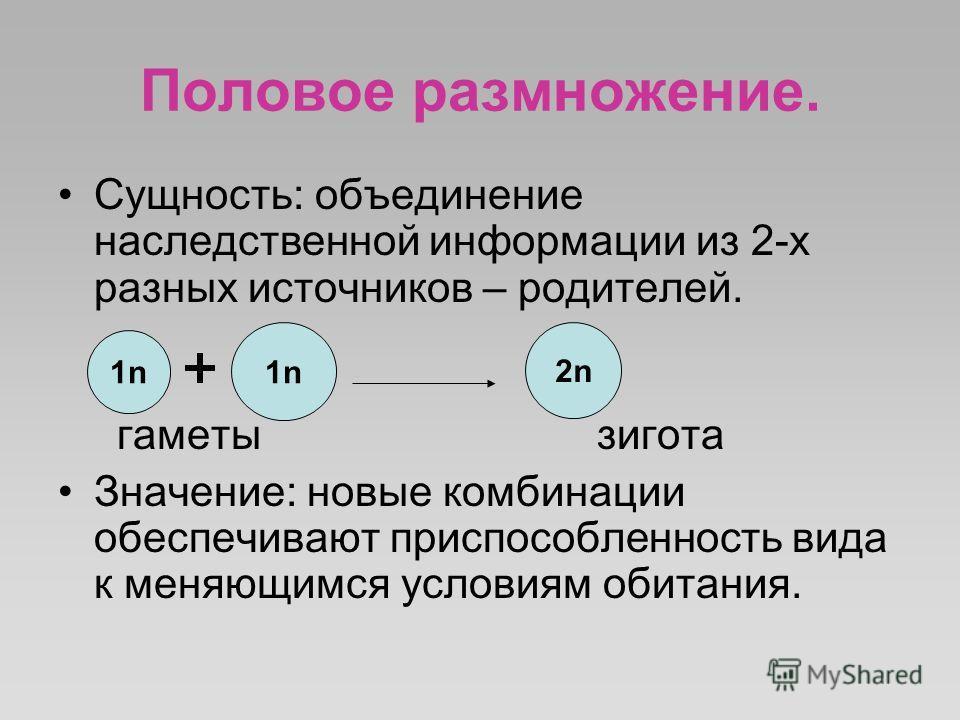 Половое размножение. Сущность: объединение наследственной информации из 2-х разных источников – родителей. гаметы зигота Значение: новые комбинации обеспечивают приспособленность вида к меняющимся условиям обитания. 1n1n 1n1n 2n2n