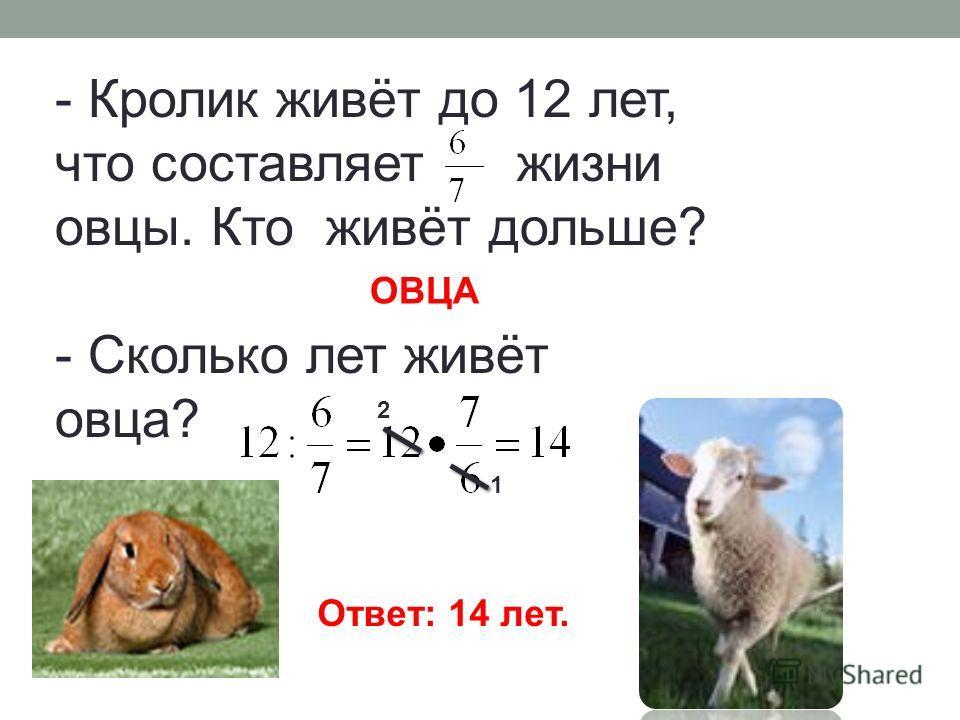 - Кролик живёт до 12 лет, что составляет жизни овцы. Кто живёт дольше? - Сколько лет живёт овца? ОВЦА Ответ: 14 лет. 2 1