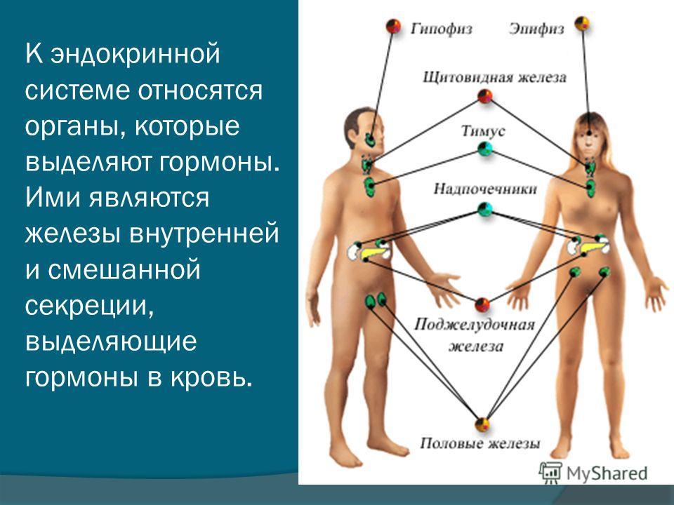 К эндокринной системе относятся органы, которые выделяют гормоны. Ими являются железы внутренней и смешанной секреции, выделяющие гормоны в кровь.