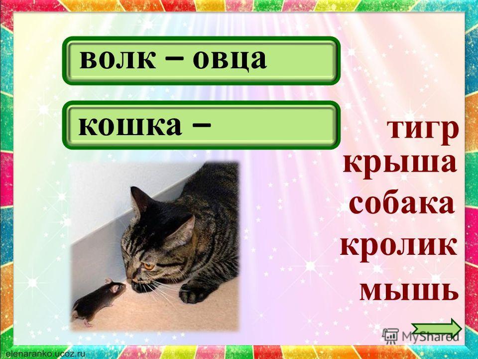 волк – овца крыша тигр собака кошка – мышь кролик