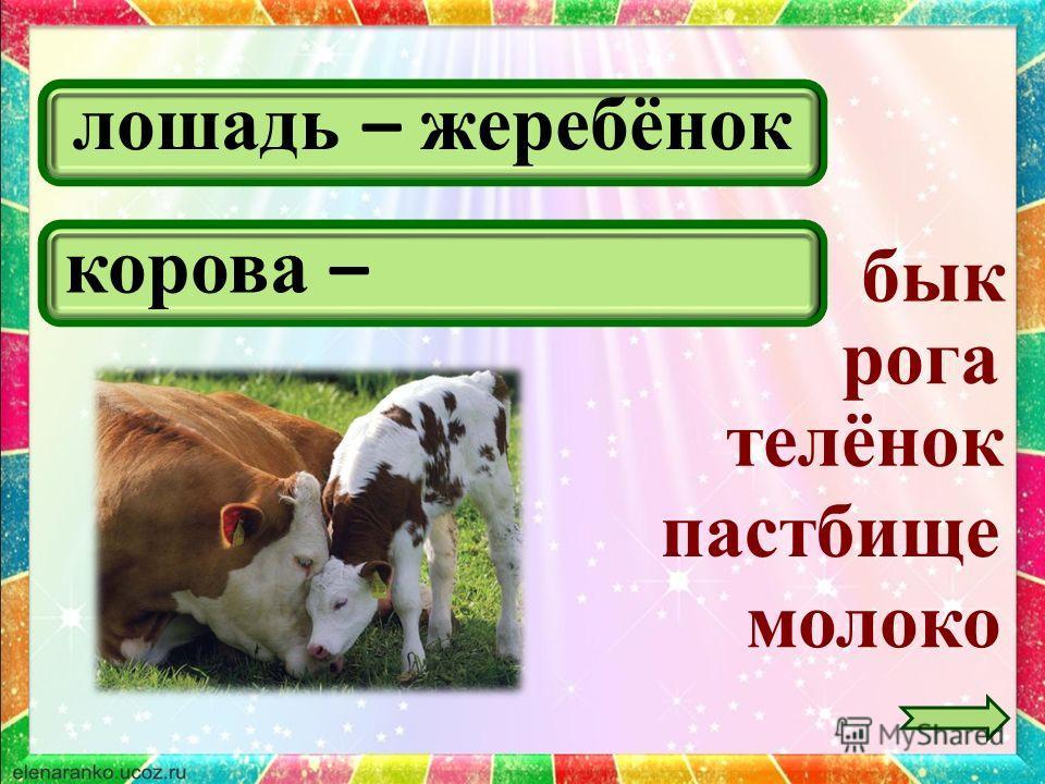 лошадь – жеребёнок молоко бык рога корова – телёнок пастбище