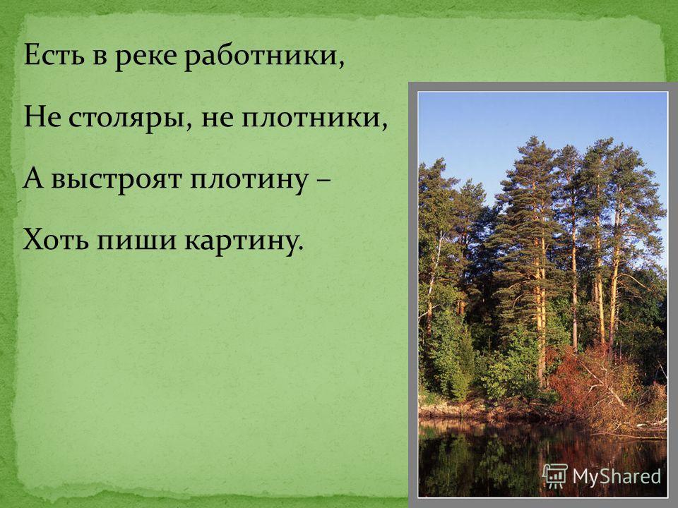 Есть в реке работники, Не столяры, не плотники, А выстроят плотину – Хоть пиши картину.
