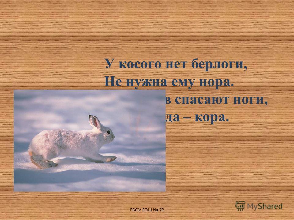 У косого нет берлоги, Не нужна ему нора. От врагов спасают ноги, А от голода – кора. ГБОУ СОШ 72