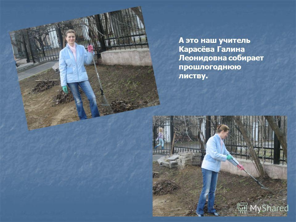 А это наш учитель Карасёва Галина Леонидовна собирает прошлогоднюю листву.