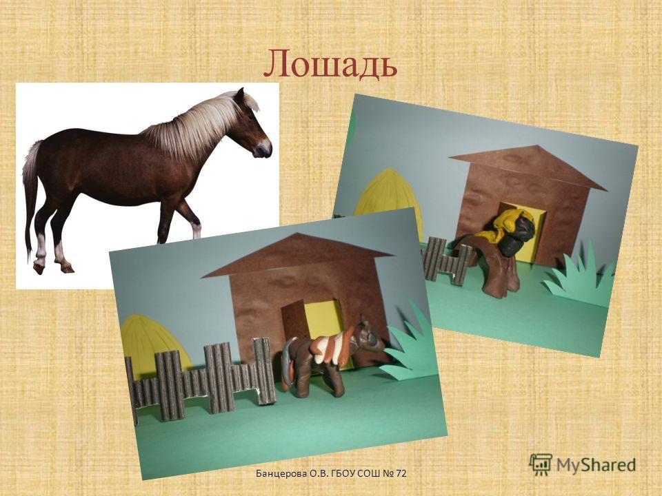 Лошадь Банцерова О.В. ГБОУ СОШ 72