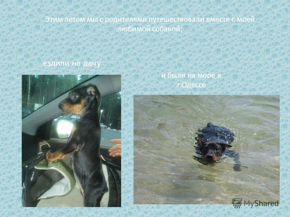 Этим летом мы с родителями путешествовали вместе с моей любимой собакой: и были на море в г.Одессе ездили на дачу