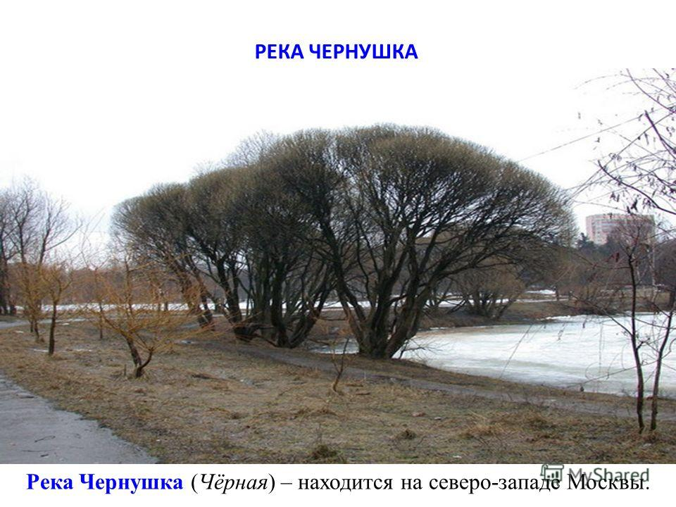 Река Чернушка (Чёрная) – находится на северо-западе Москвы. РЕКА ЧЕРНУШКА