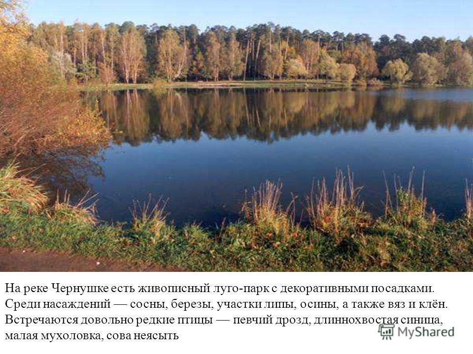http://mosriver.narod.ru/chernushka5.jpg На реке Чернушке есть живописный луго-парк с декоративными посадками. Среди насаждений сосны, березы, участки липы, осины, а также вяз и клён. Встречаются довольно редкие птицы певчий дрозд, длиннохвостая сини