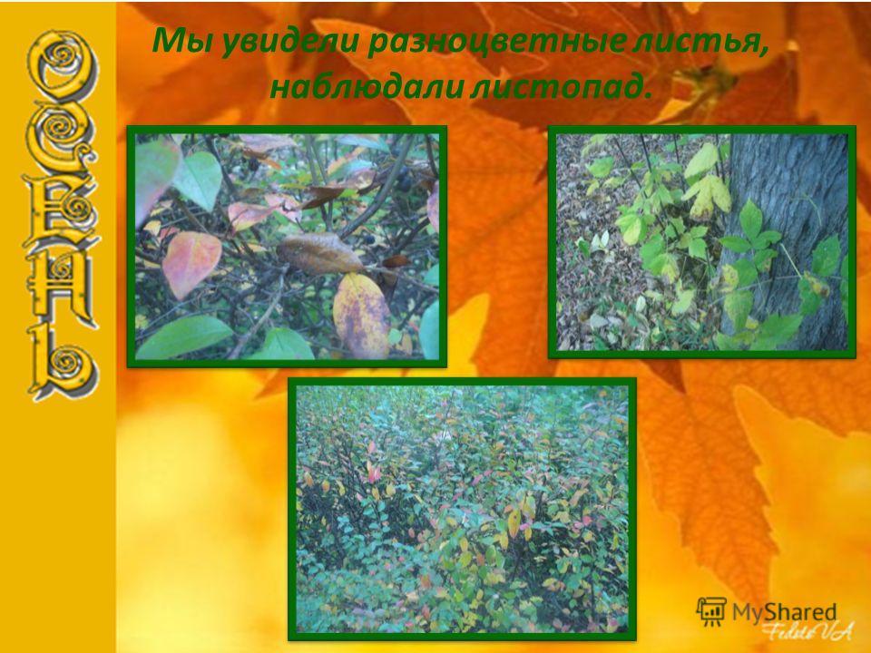 Мы увидели разноцветные листья, наблюдали листопад.