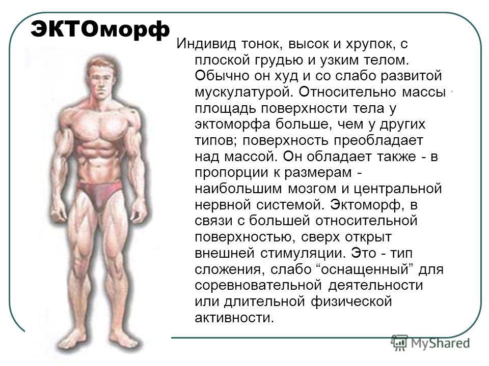 ЭКТОморф Индивид тонок, высок и хрупок, с плоской грудью и узким телом. Обычно он худ и со слабо развитой мускулатурой. Относительно массы площадь поверхности тела у эктоморфа больше, чем у других типов; поверхность преобладает над массой. Он обладае