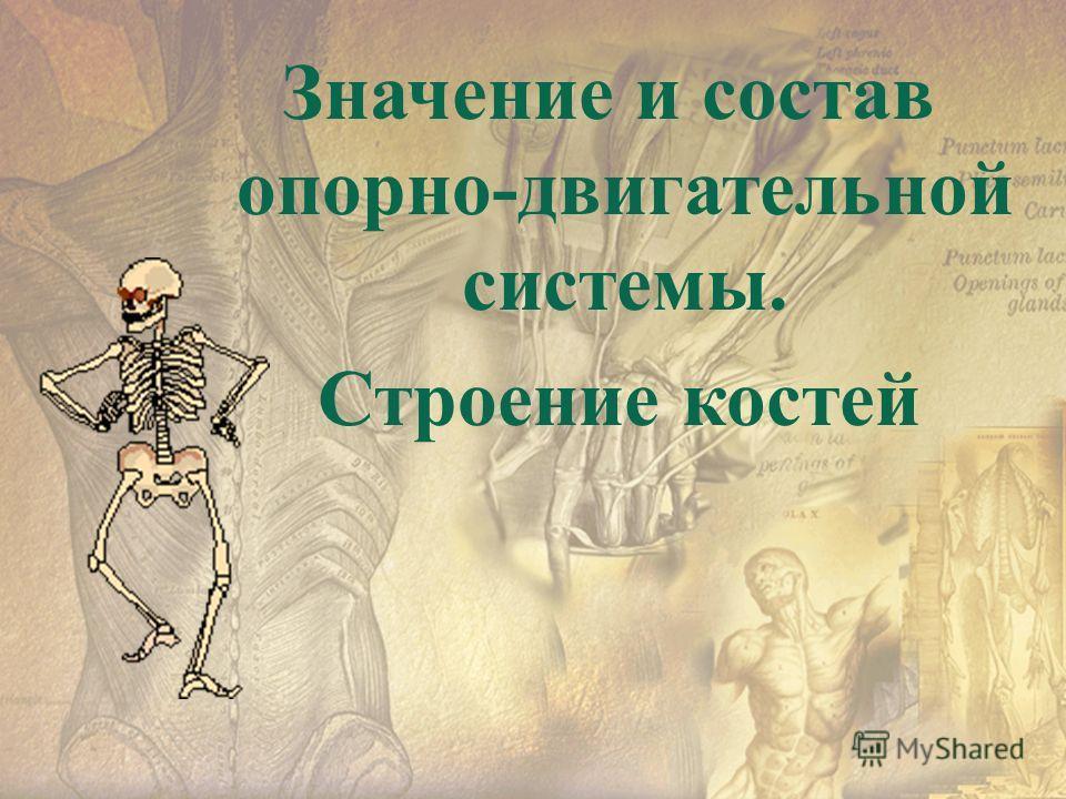 Значение и состав опорно-двигательной системы. Строение костей