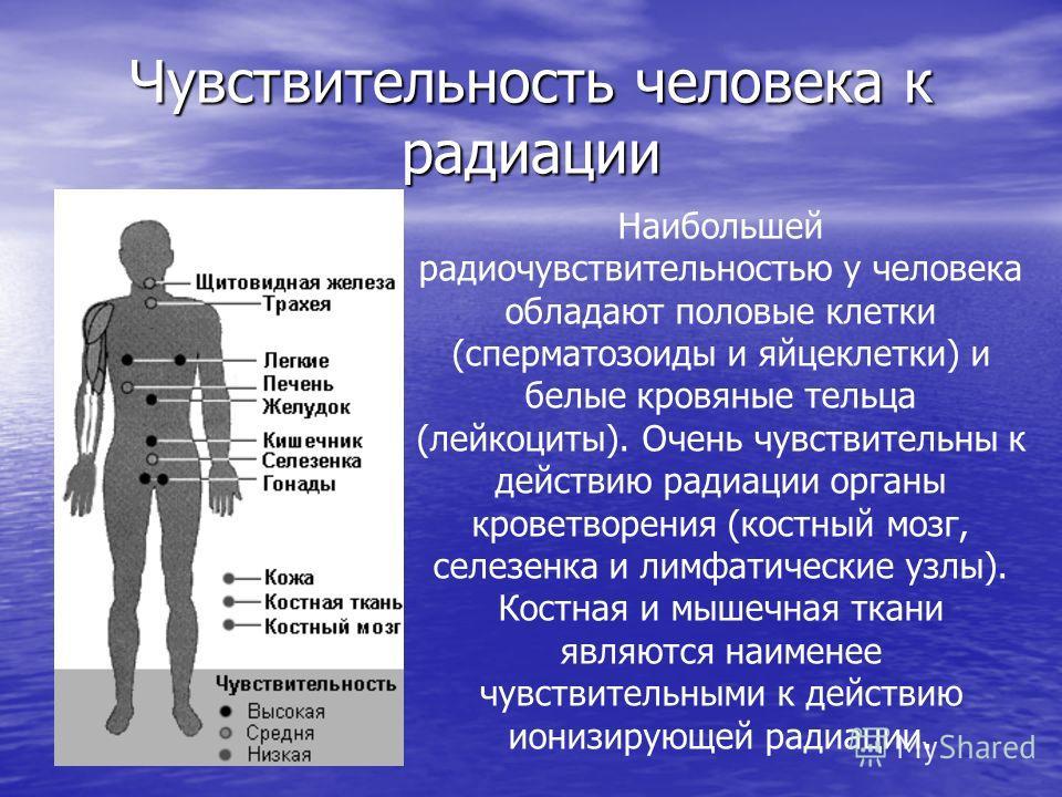 Чувствительность человека к радиации Наибольшей радиочувствительностью у человека обладают половые клетки (сперматозоиды и яйцеклетки) и белые кровяные тельца (лейкоциты). Очень чувствительны к действию радиации органы кроветворения (костный мозг, се