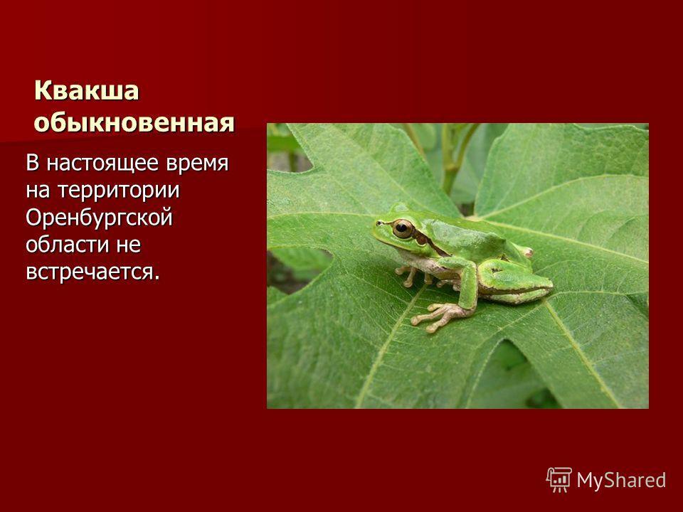 Квакша обыкновенная В настоящее время на территории Оренбургской области не встречается.