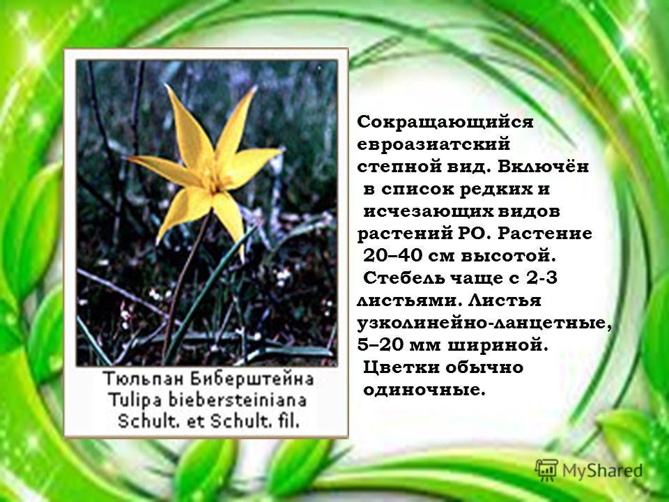 Сокращающийся евроазиатский степной вид. Включён в список редких и исчезающих видов растений РО. Растение 20–40 см высотой. Стебель чаще с 2-3 листьями. Листья узколинейно-ланцетные, 5–20 мм шириной. Цветки обычно одиночные.