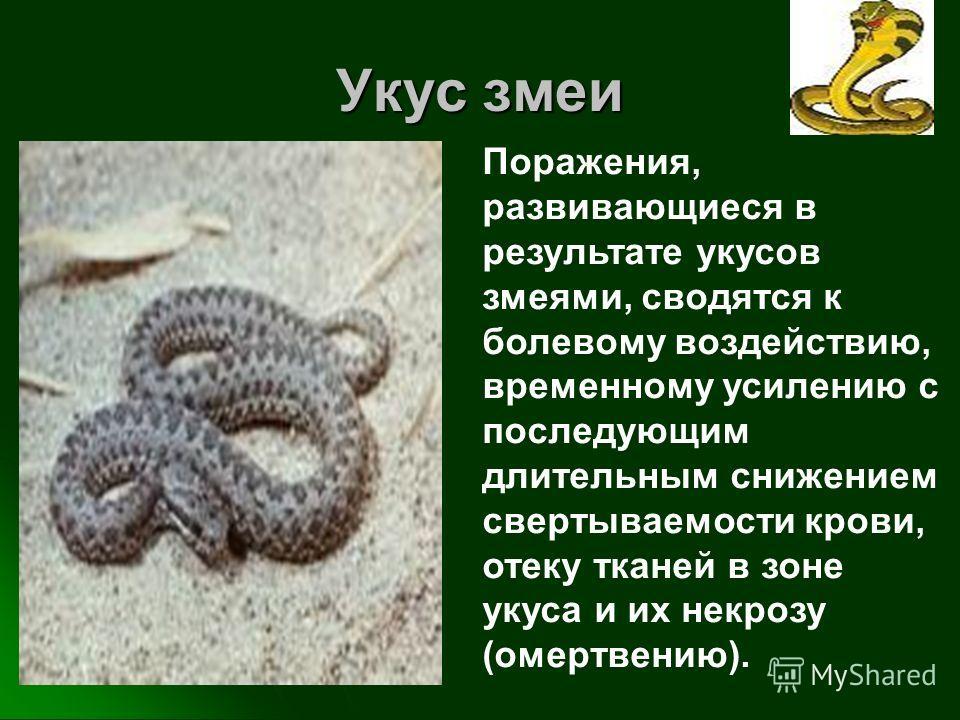 Укус змеи Поражения, развивающиеся в результате укусов змеями, сводятся к болевому воздействию, временному усилению с последующим длительным снижением свертываемости крови, отеку тканей в зоне укуса и их некрозу (омертвению).