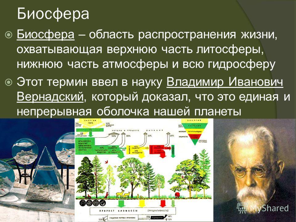 Биосфера Биосфера – область распространения жизни, охватывающая верхнюю часть литосферы, нижнюю часть атмосферы и всю гидросферу Этот термин ввел в науку Владимир Иванович Вернадский, который доказал, что это единая и непрерывная оболочка нашей плане