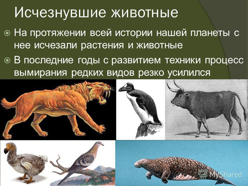 Исчезнувшие животные На протяжении всей истории нашей планеты с нее исчезали растения и животные В последние годы с развитием техники процесс вымирания редких видов резко усилился
