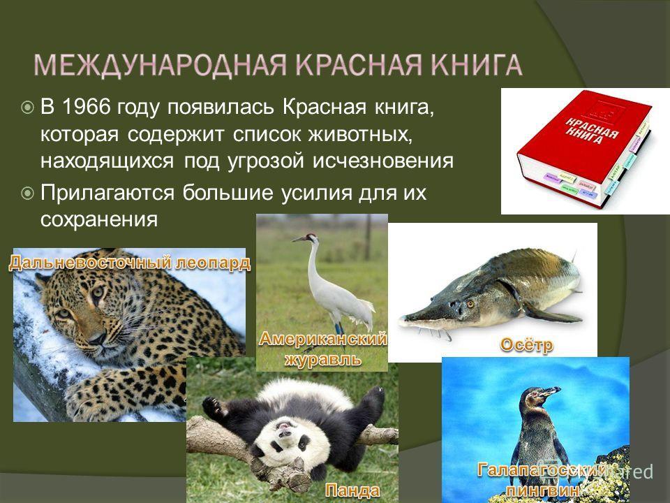 В 1966 году появилась Красная книга, которая содержит список животных, находящихся под угрозой исчезновения Прилагаются большие усилия для их сохранения