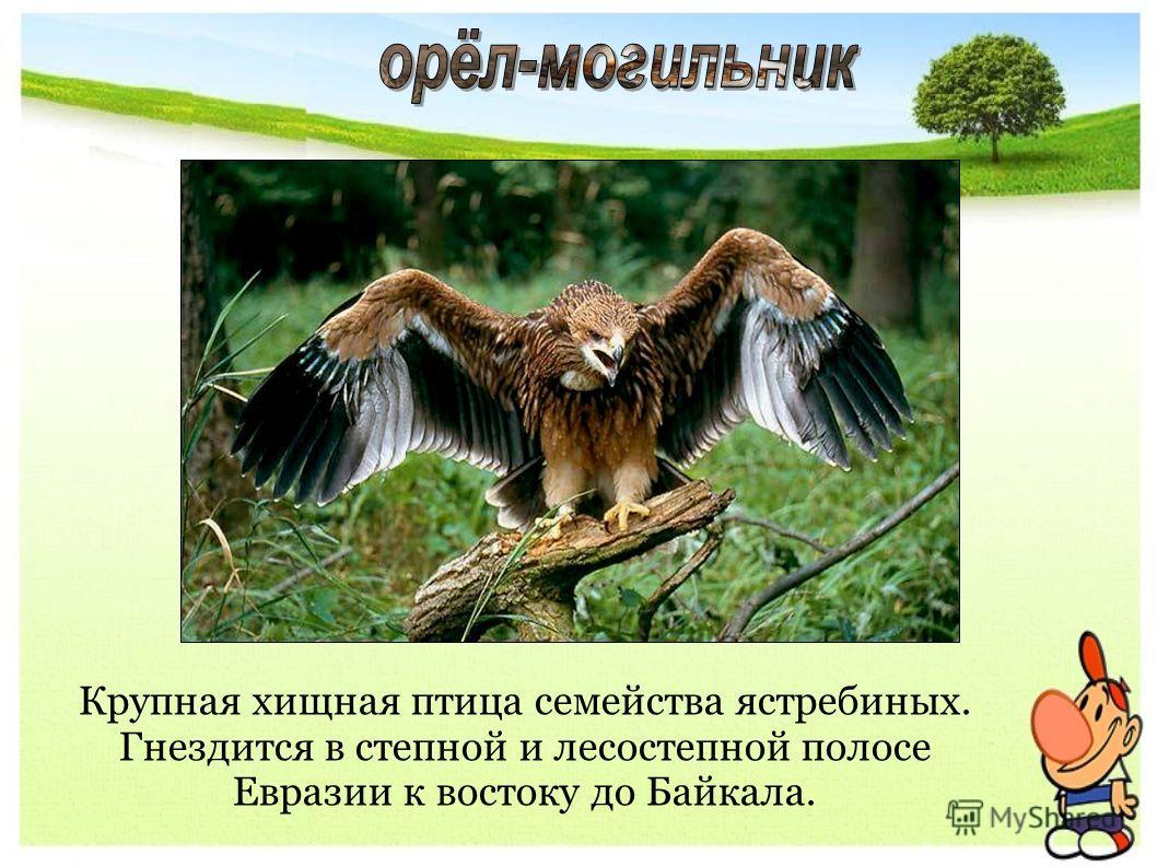 Крупная хищная птица семейства ястребиных. Гнездится в степной и лесостепной полосе Евразии к востоку до Байкала.
