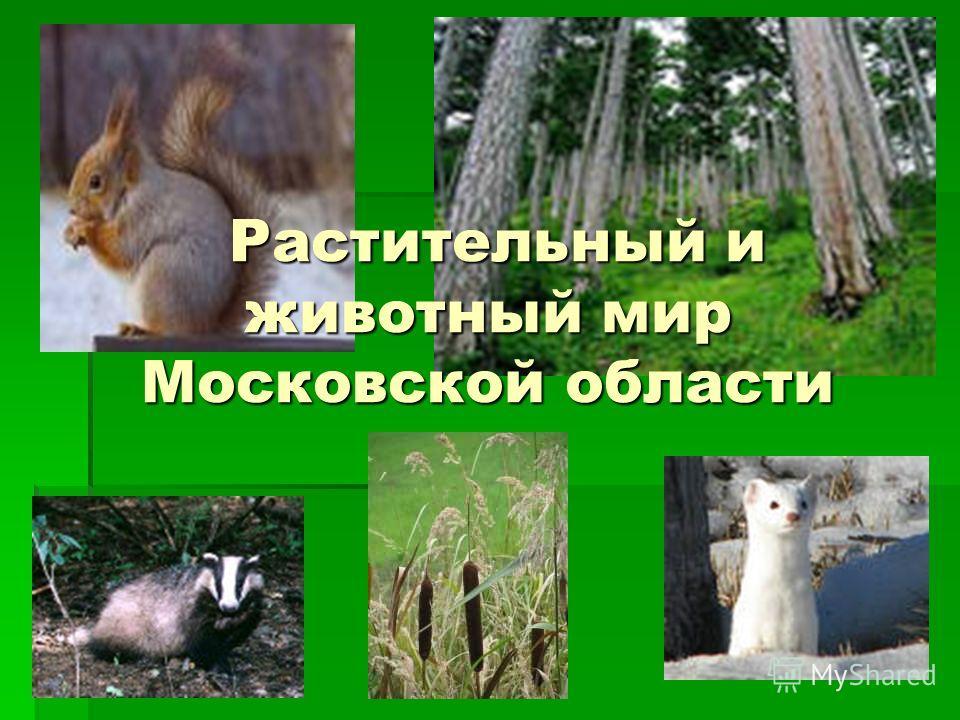Растительный и животный мир Московской области Растительный и животный мир Московской области