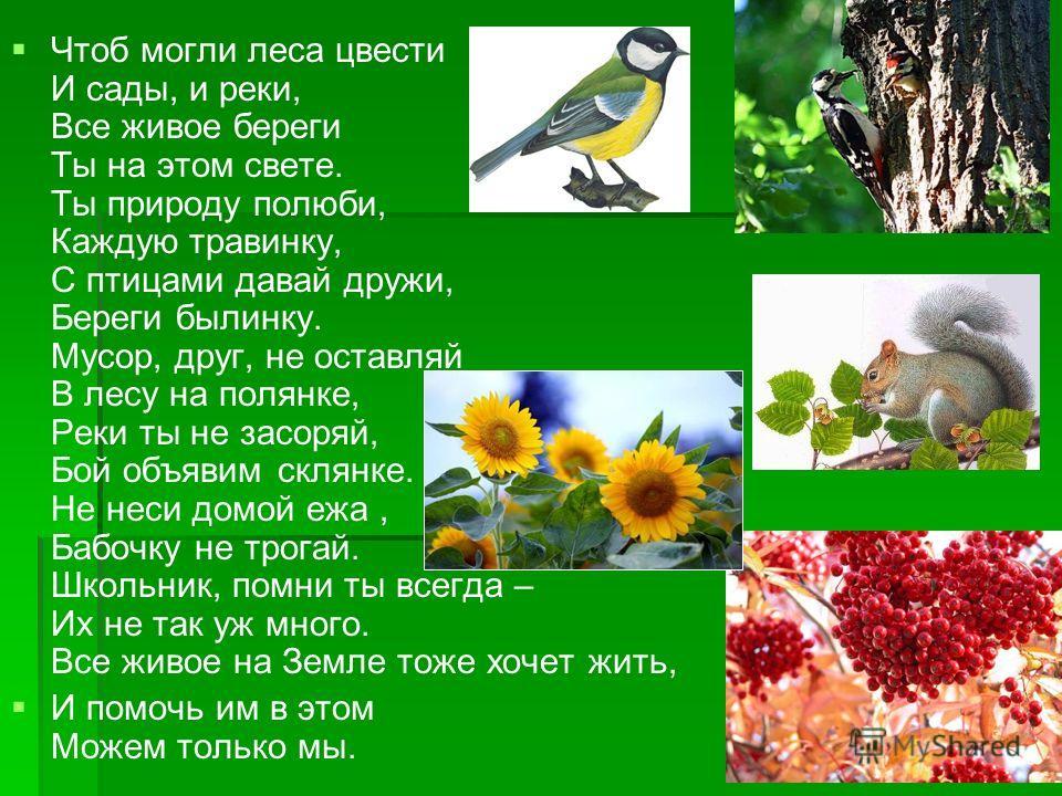 Чтоб могли леса цвести И сады, и реки, Все живое береги Ты на этом свете. Ты природу полюби, Каждую травинку, С птицами давай дружи, Береги былинку. Мусор, друг, не оставляй В лесу на полянке, Реки ты не засоряй, Бой объявим склянке. Не неси домой еж