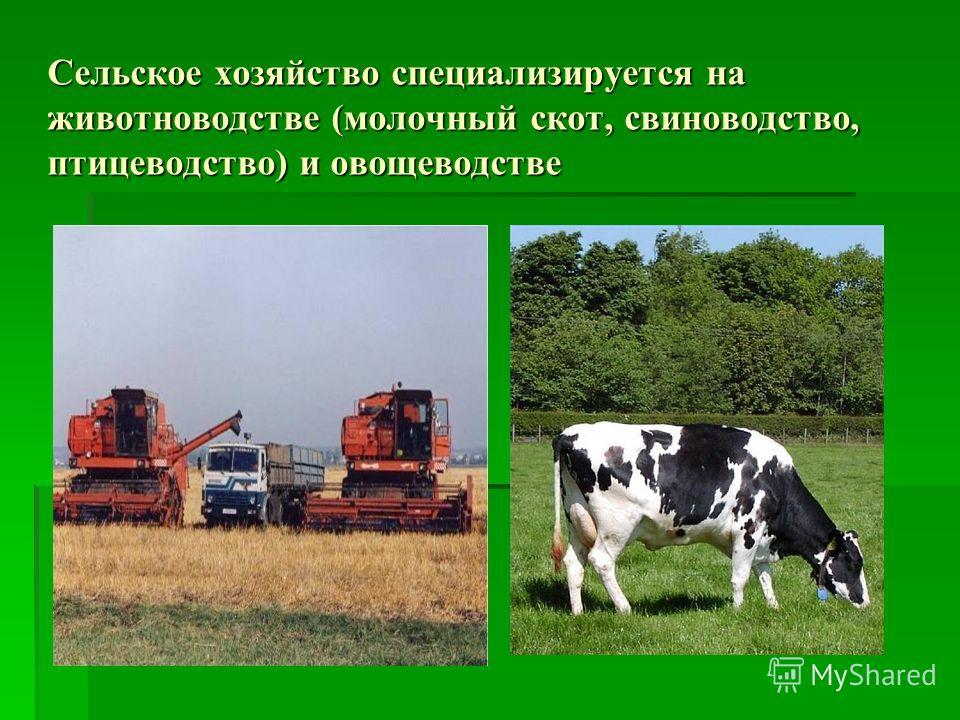 Сельское хозяйство специализируется на животноводстве (молочный скот, свиноводство, птицеводство) и овощеводстве