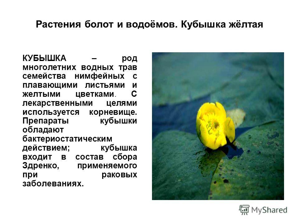 Растения болот и водоёмов. Кубышка жёлтая КУБЫШКА – род многолетних водных трав семейства нимфейных с плавающими листьями и желтыми цветками. С лекарственными целями используется корневище. Препараты кубышки обладают бактериостатическим действием; ку