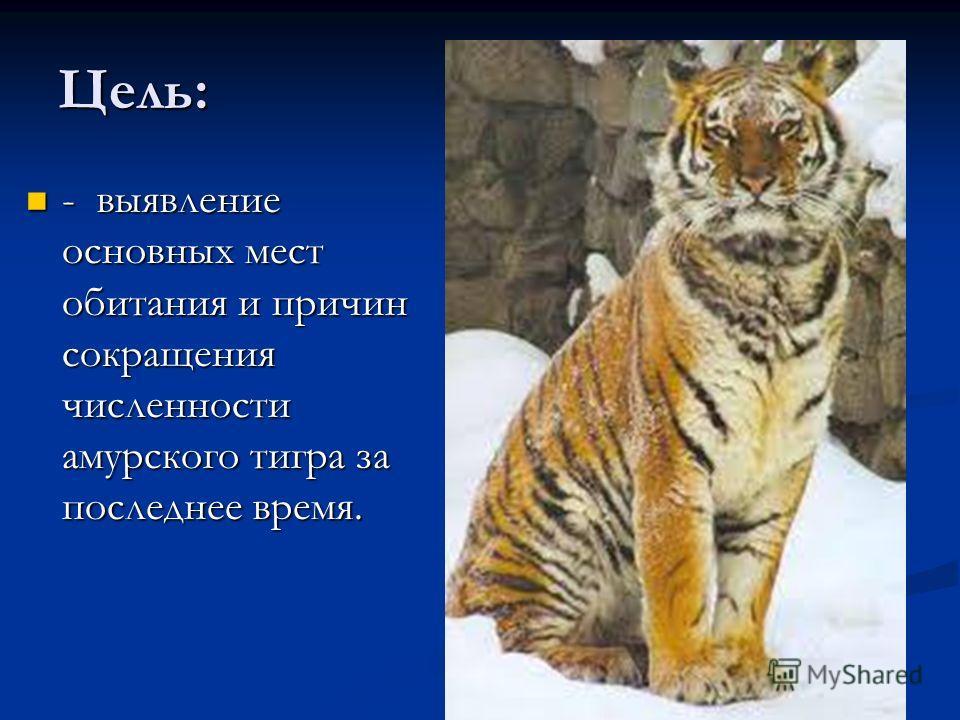 Цель: - выявление основных мест обитания и причин сокращения численности амурского тигра за последнее время. - выявление основных мест обитания и причин сокращения численности амурского тигра за последнее время.