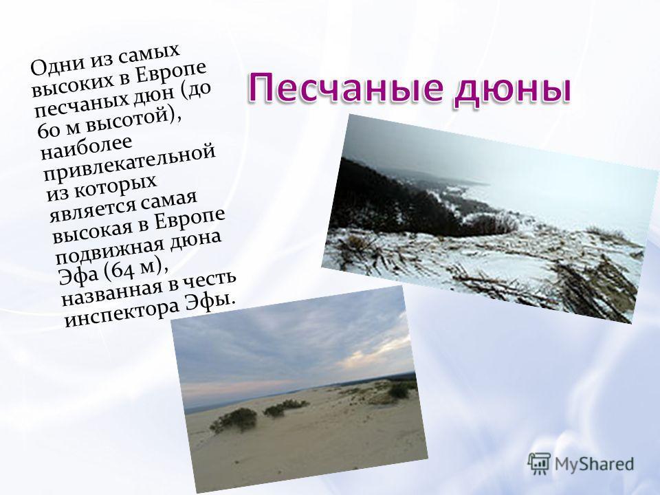 Одни из самых высоких в Европе песчаных дюн (до 60 м высотой), наиболее привлекательной из которых является самая высокая в Европе подвижная дюна Эфа (64 м), названная в честь инспектора Эфы.