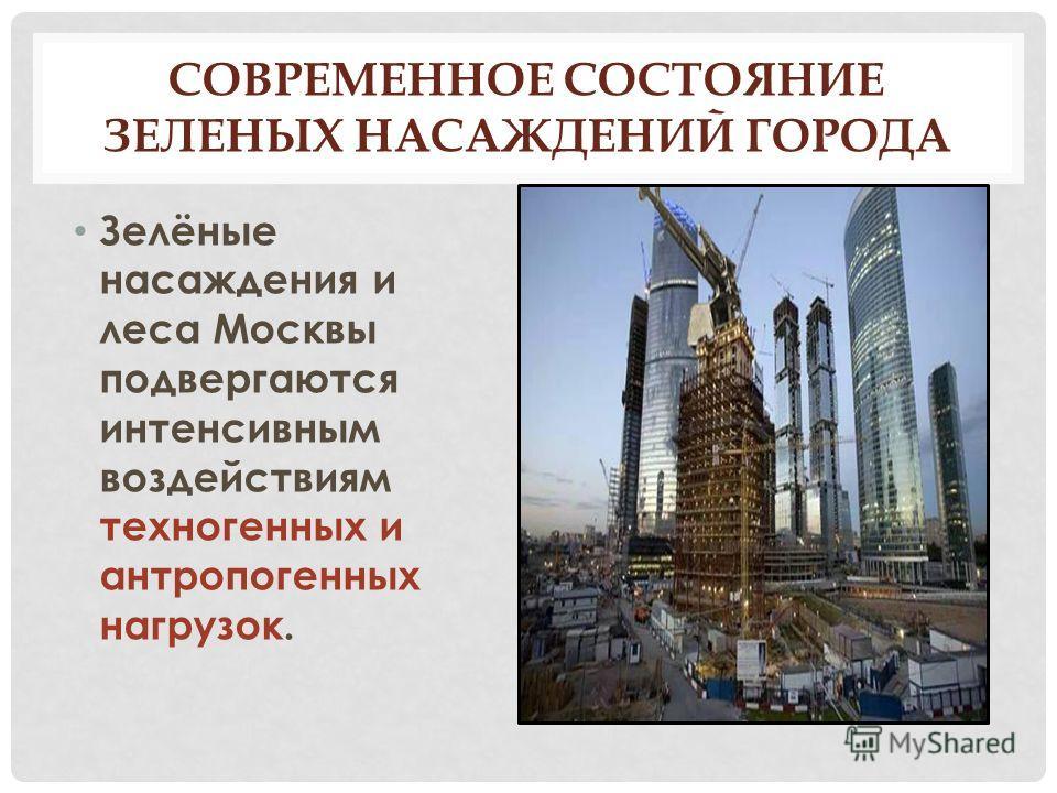 СОВРЕМЕННОЕ СОСТОЯНИЕ ЗЕЛЕНЫХ НАСАЖДЕНИЙ ГОРОДА Зелёные насаждения и леса Москвы подвергаются интенсивным воздействиям техногенных и антропогенных нагрузок.