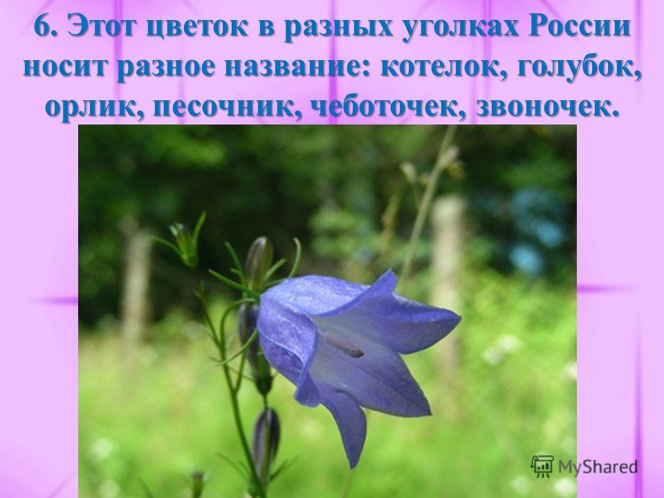 6. Этот цветок в разных уголках России носит разное название: котелок, голубок, орлик, песочник, чеботочек, звоночек.