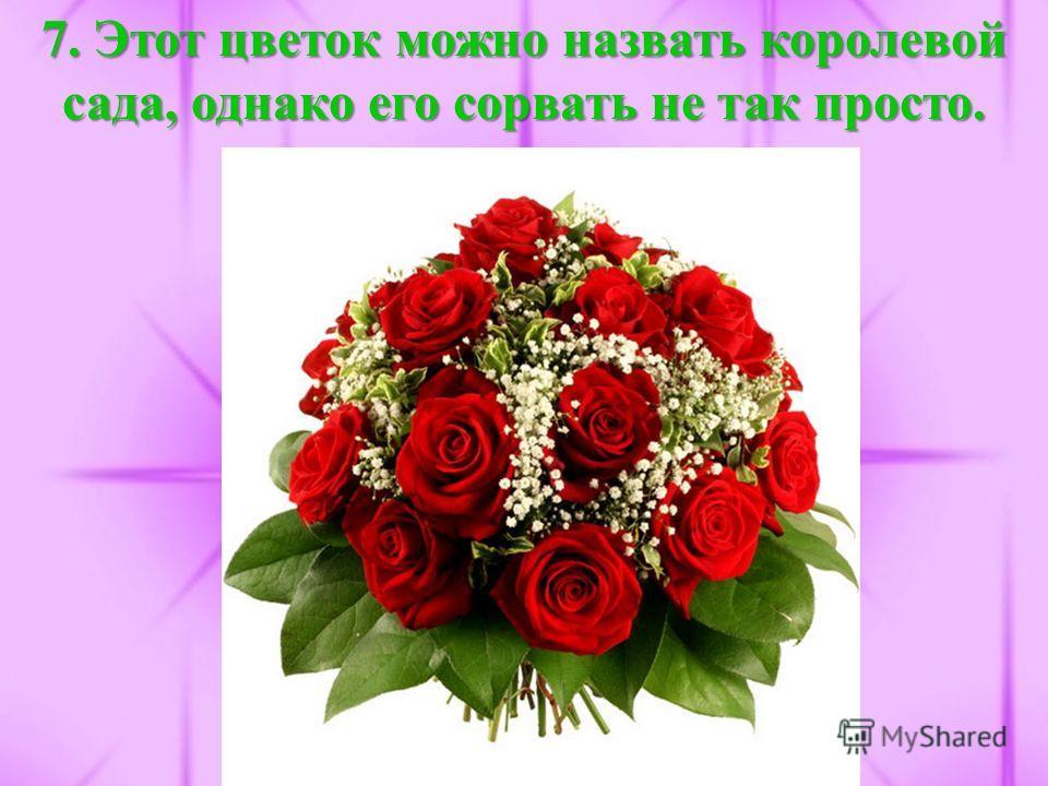 7. Этот цветок можно назвать королевой сада, однако его сорвать не так просто.