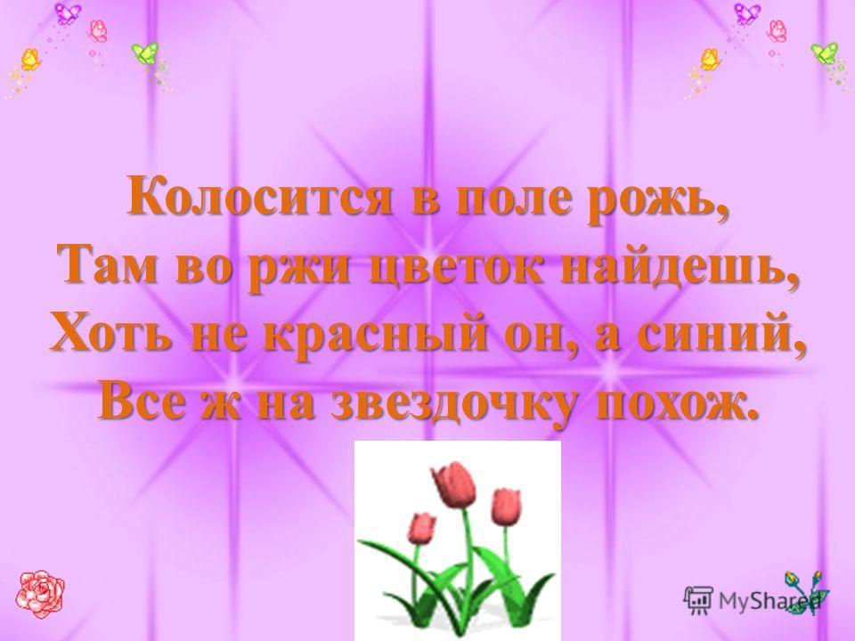 Колосится в поле рожь, Там во ржи цветок найдешь, Хоть не красный он, а синий, Все ж на звездочку похож.