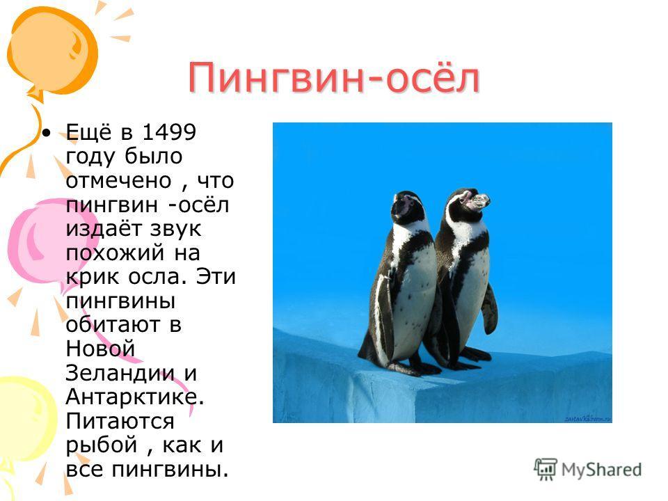 Пингвин-осёл Ещё в 1499 году было отмечено, что пингвин -осёл издаёт звук похожий на крик осла. Эти пингвины обитают в Новой Зеландии и Антарктике. Питаются рыбой, как и все пингвины.