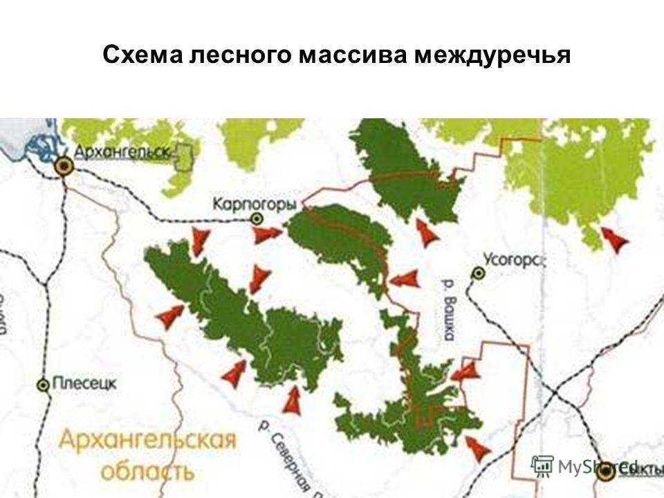 Схема лесного массива междуречья