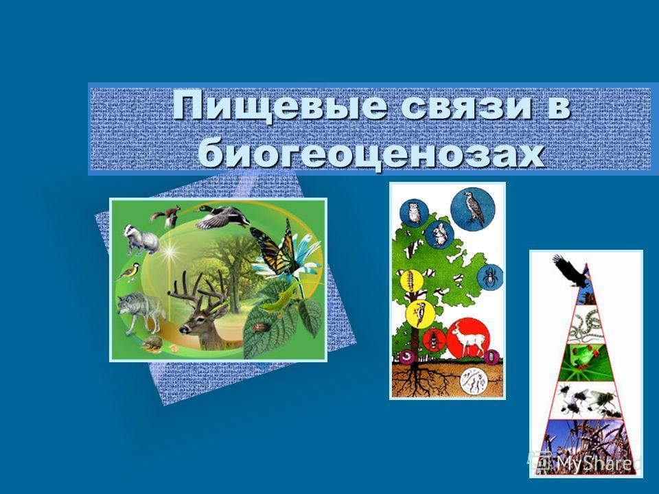 Пищевые связи в биогеоценозах