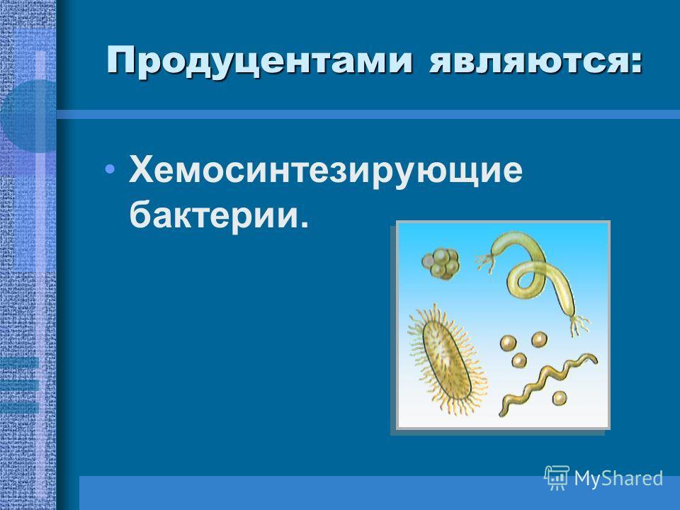 Хемосинтезирующие бактерии.