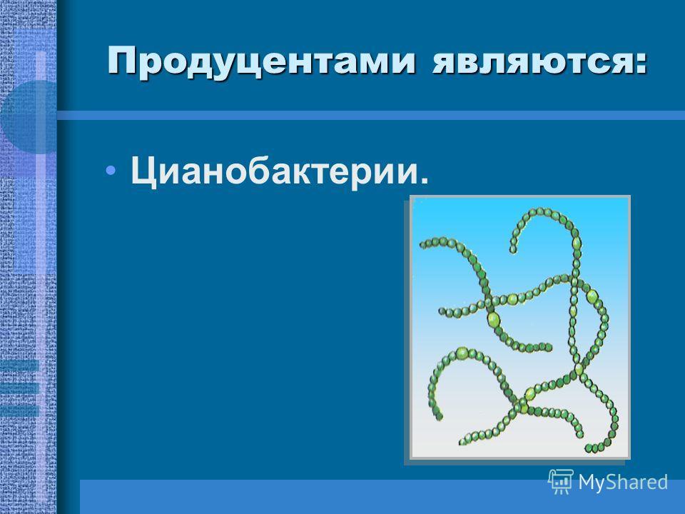 Цианобактерии.