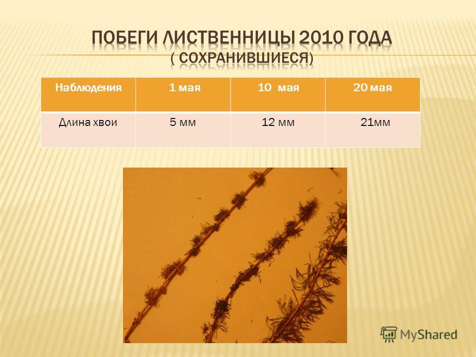 Наблюдения 1 мая10 мая20 мая Длина хвои5 мм12 мм 21мм