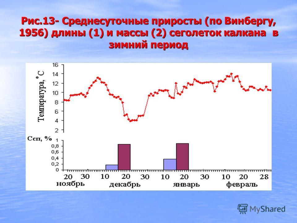Рис.13- Среднесуточные приросты (по Винбергу, 1956) длины (1) и массы (2) сеголеток калкана в зимний период