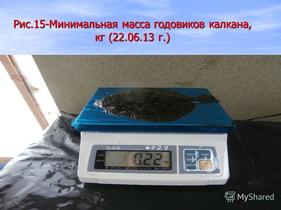 Рис.15-Минимальная масса годовиков калкана, кг (22.06.13 г.)